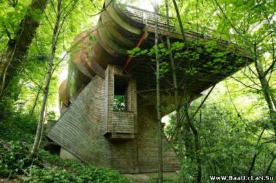 Tree House (Ağac Ev)