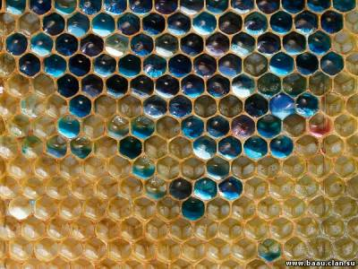 Colored Honey Made by Candy-Eating French Bees